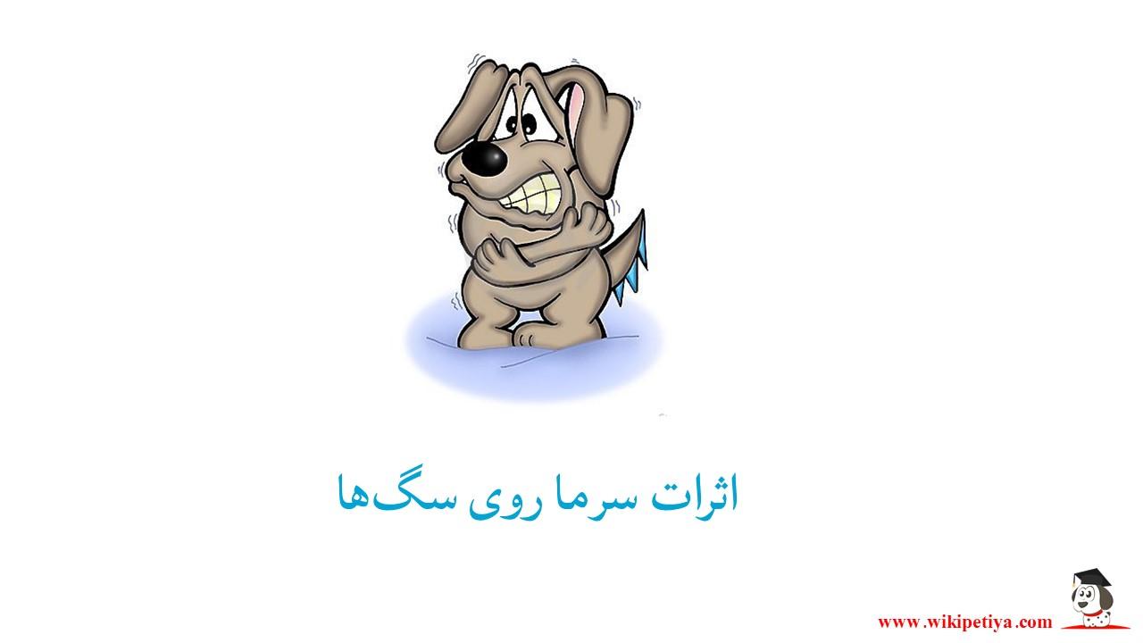 اثرات سرما روی سگ ها