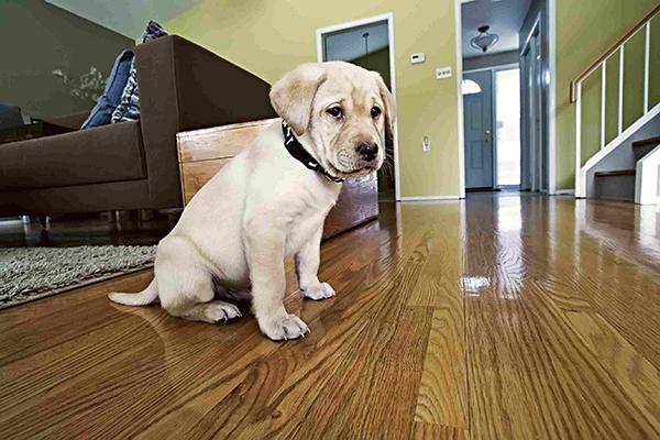مراقبت از توله سگ تازه در منزل
