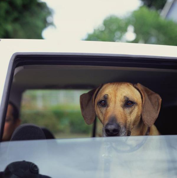 فوبیا و ترسهای سگ