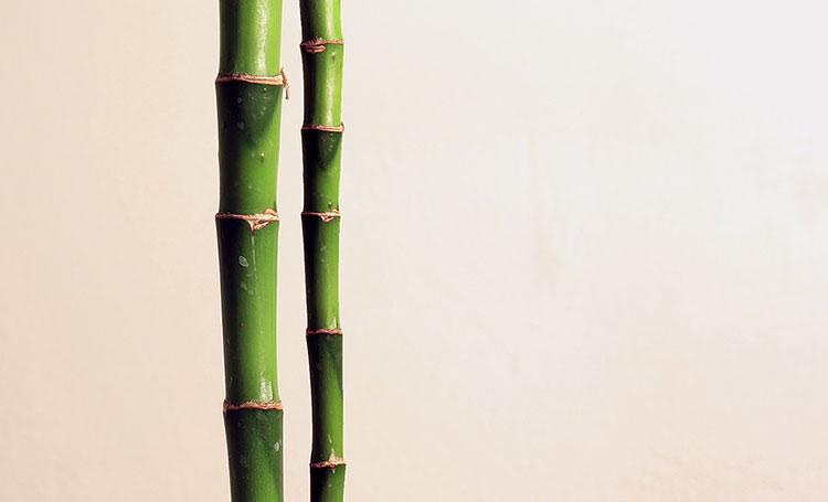 بامبو