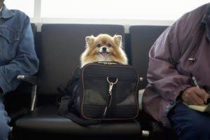 مسافرت رفتن با سگها