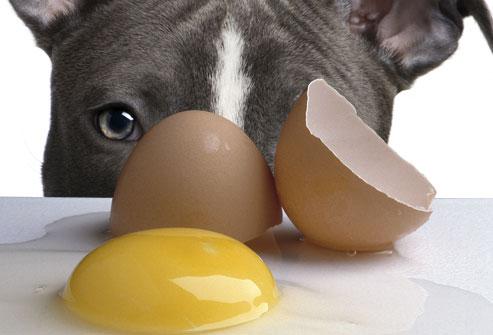 مواد غذایی خطرناک برای سگ ها