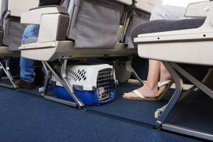 حمل سگ با هواپیما