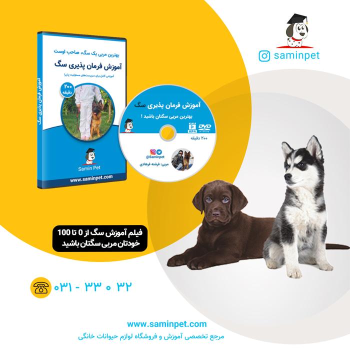 فیلم آموزش سگ