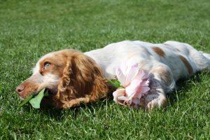 سگم چمن میخورد