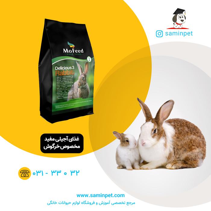 غذای آجیلی مفید مخصوص خرگوش