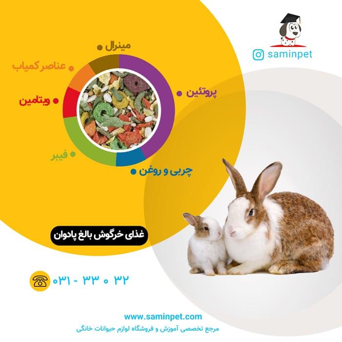 غذای خرگوش بالغ پادوان با کیفیت پرمیوم