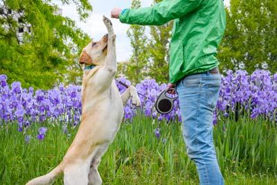 تربیت سگ در اصفهان