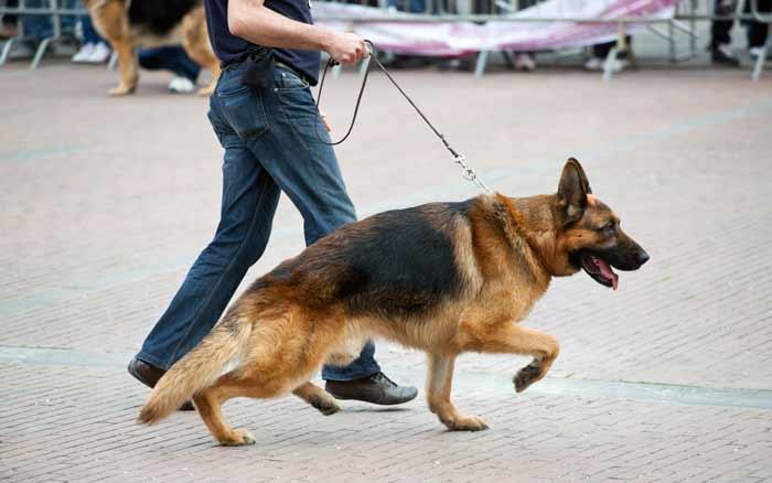 آموزش سگ ژرمن