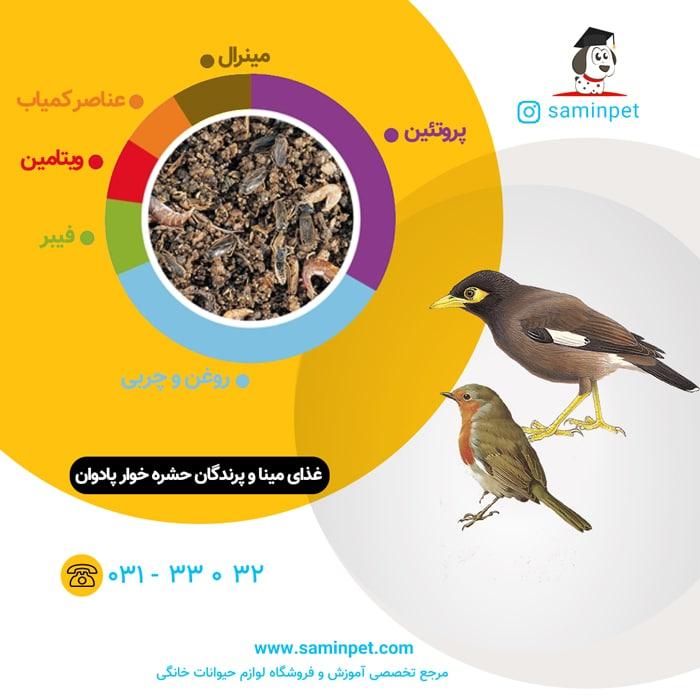 غذای مرغ مینا و پرندگان حشره خوار پادوان
