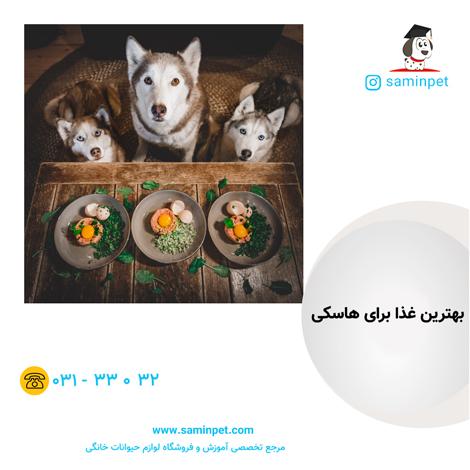 غذای سگ هاسکی