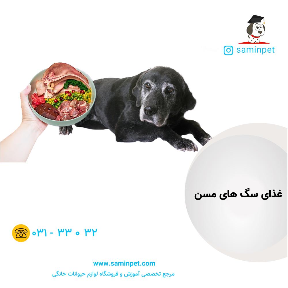 غذای سگ مسن