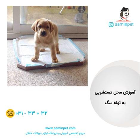 آموزش دستشویی به توله سگ