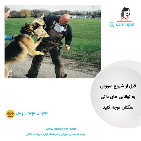 تربیت سگ ژرمن