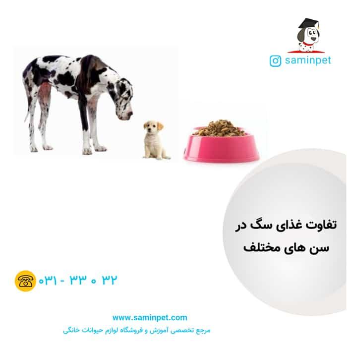 تفاوت غذای توله سگ و سگ بالغ
