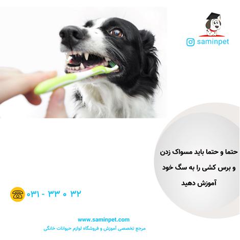 تربیت سگ