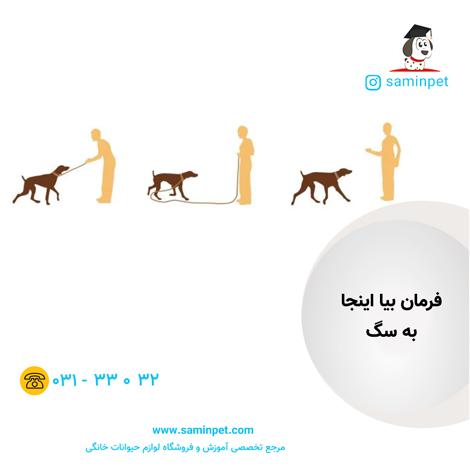 آموزش بیا اینجا به سگ