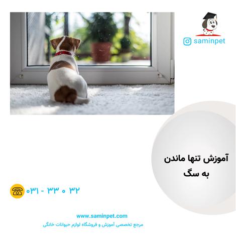 آموزش تنها ماندن به سگ