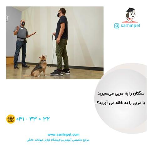 تربیت سگ در منزل