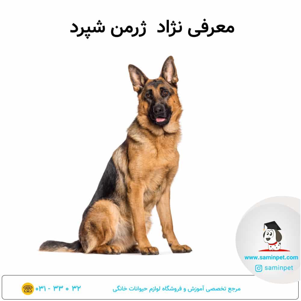 معرفی سگ ژرمن